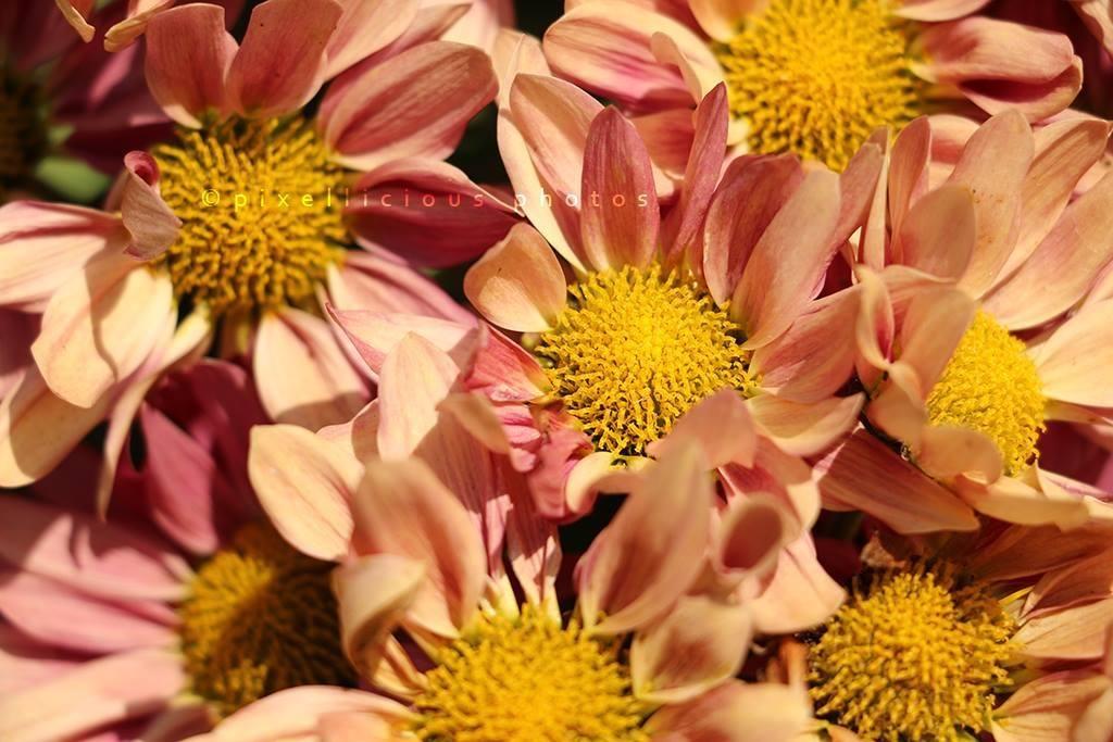 Flower shot using Canon EOS70D