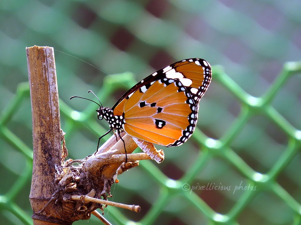 Butterfly at Maharashtra Nature Park
