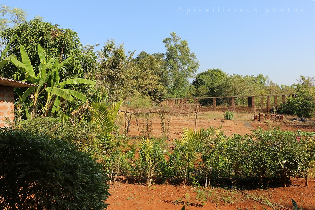 Farm Area at Majhya Mamacha Gaon