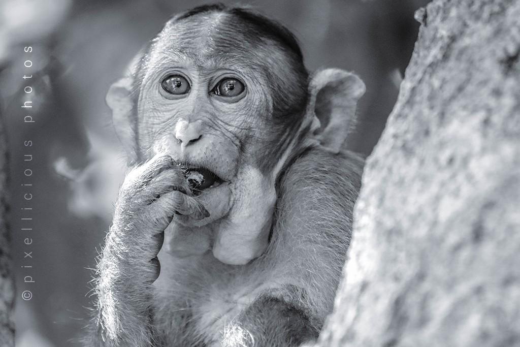 Monkey at Karnala Bird Sanctuary