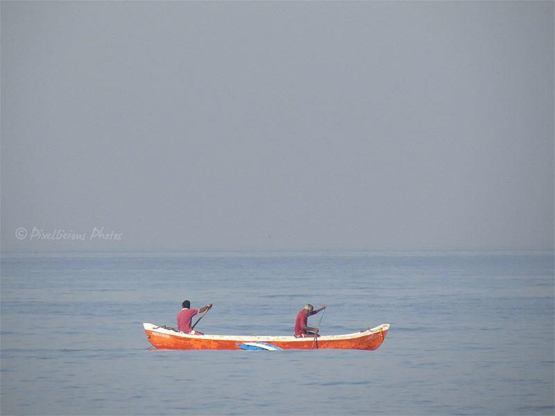 Aksa Beach Malad, Mumbai   Bird Photography 1