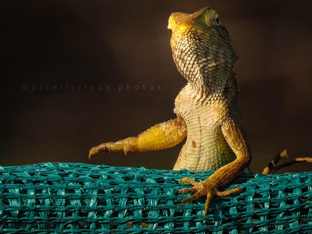 Chameleon Photo Shot at Ambivali Village