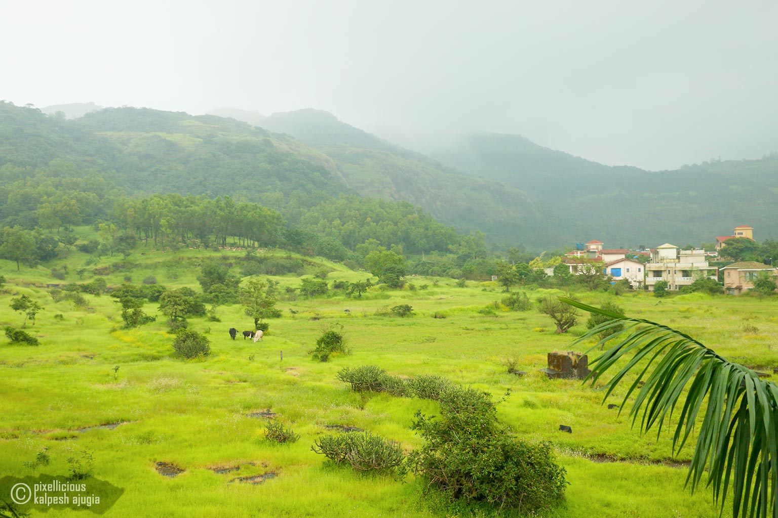 Orchard Resort Lonavala | Review, Photos and More 2